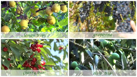 zöldségek : fruit trees montage with old style subtitles
