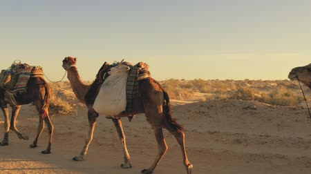 deserto : caravan of nomads in the Sahara desert tunisian