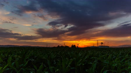 Калифорния : Colorful California Cornfield Sunset Time Lapse