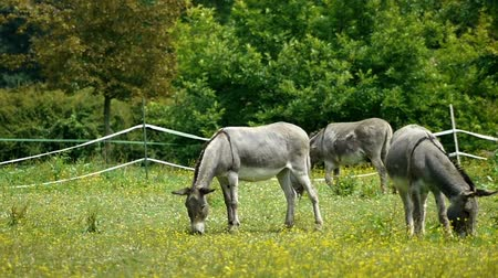 európa : Donkeys at the french countryside