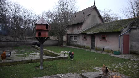 charakteristický : French farm, birdhouse and chickens