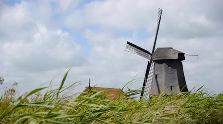 młyn : Dutch wind mill with grass landscape
