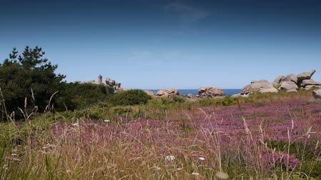 ploumanach : Ploumanach pink granite rocks. Brittany France Stock Footage