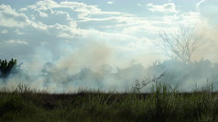 Field Fire in Tropical Country