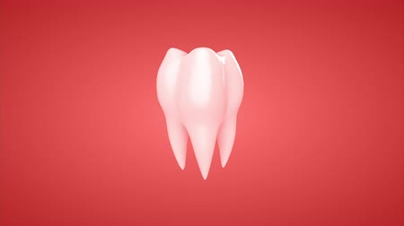 3d animation rotation tooth. Loop, alpha channel. Стоковые видеозаписи