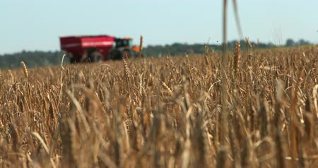 plowed land : Wheat Field In Focus With Combine Harvesting Behind. Prores, Slow Motion