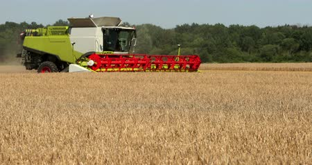 trigo sarraceno : Combine Harvesting In A Field Of Golden Wheat. Prores, Slow Motion