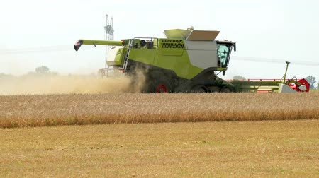трактор : Green Dry Harvester With White Part Of Crop Harvests Harvest During Harvest. Part Of The Field Is Already Harvesting Part Of The Rye Harvester Threshing. In Autumn, Time To Collect Rye, Wheat Barley