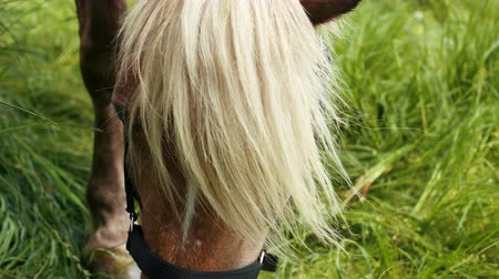 hoofs : Horse is eating fresh grass on the green meadow, close up. Prores, slow motion Stock Footage
