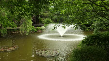 trepadeira : A beautiful fountain shakes water from the lake in a botanical garden, around beautiful trees, plants, flowers. Wide angle, prores, slow motion