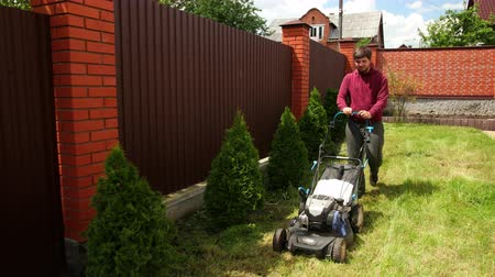 cutting open : a young man, with a beard in gray trousers and a Burgundy sweatshirt, mows the grass with a lawn mower, backyard, in the afternoon, in Sunny weather, along a high fence, near thuja