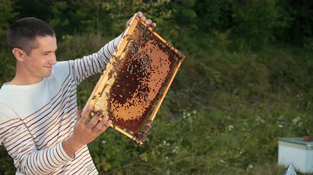 worker bees : beekeeper stands near the hives holding bee frame in which there is a honeycomb