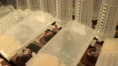 worker bees : shelves with cell curlers for the withdrawal of queen bee in a special locker