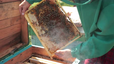 опылять : frames of a bee hive, beekeeper in green special clothes harvesting honey