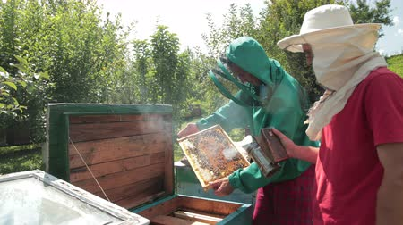 worker bees : two beekeepers in green and red special attire, collecting honey
