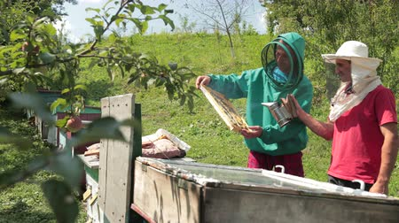улей : two beekeepers in green and red special attire, collecting honey