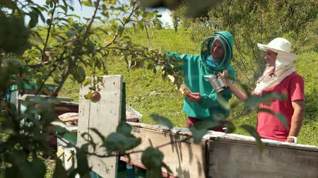 опылять : two beekeepers in green and red special attire, collecting honey
