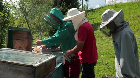 опылять : frames beehive, three beekeepers in special clothes that collect honey Стоковые видеозаписи