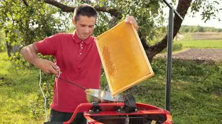 barátságos : beekeeper cuts wax from honeycomb frame with a special electrik knife Stock mozgókép