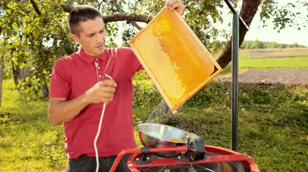 favo de mel : beekeeper cuts wax from honeycomb frame with a special electrik knife Vídeos