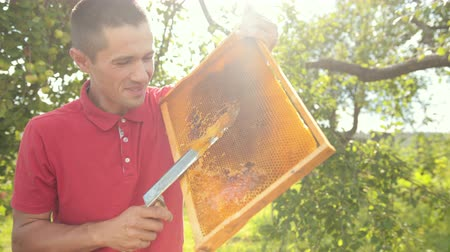 медовый : beekeeper cuts wax from honeycomb frame with a special electrik knife Стоковые видеозаписи