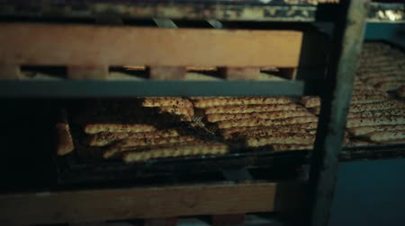 cumino : Baker hands in gloves push tray with long pastry baked sticks back in rack as shelf. Crispbead lies in rows, seasoned, sprinkled with cumin, caraway.