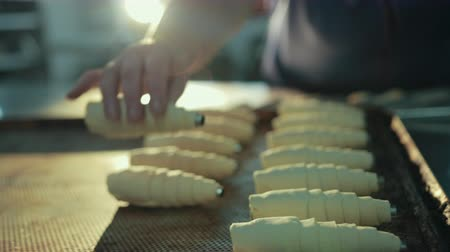 pasta sfoglia : Female confectioner puts back one uncooked croissant from oven-tray. Pastry has stainless steel tubes inside, they help keep shape, later for stuffing. Baker mover pan with sweets.