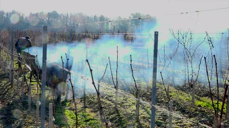 лоза : Burning of the vines in winter, vineyard, AOC SAINT-EMILION, GIRONDE, France