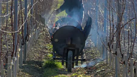 viticultura : Burning of the vines in winter, vineyard, AOC SAINT-EMILION, GIRONDE, France