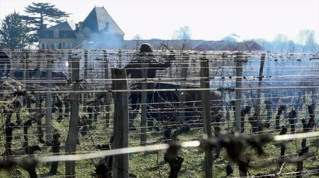 Burning of the vines in winter, vineyard, AOC SAINT-EMILION, GIRONDE, France