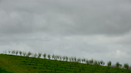 Timelapse, Rows of plum trees in spring morning and rain clouds