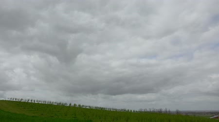 pears : Timelapse, Rows of plum trees in spring morning and rain clouds