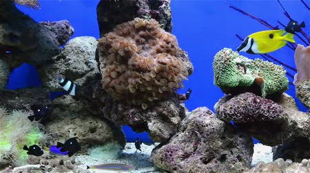 аквариум : tripical fishes and coral in aquarium