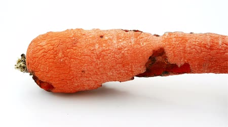 grotesque : rotating of a rotten carrot bited by insect