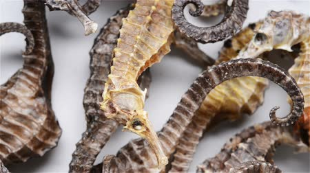 seahorse : small size seahorses as Chinese medicine rotating