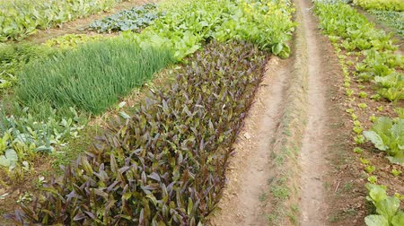 tlen : field with different vegetables Wideo