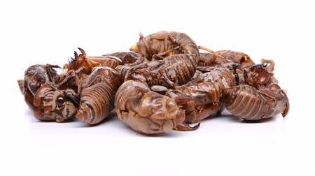 slough : side view Chinese herbs of Cicadae Periostracum or Cicada Slough stop and rotate on white background Stock Footage
