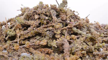 kurutulmuş : side view Chinese herbs of Herba Schizonepetae rotate and pause Stok Video