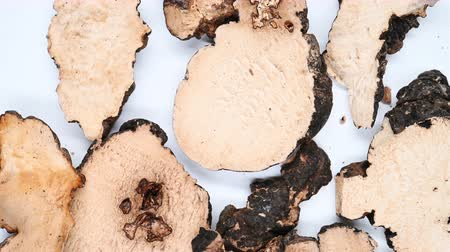 top view herb medicine ZhuLing or Polyporus or Agaric rotate and pause