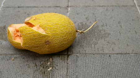 5-time slow motion of a hami melon dropped to a concrete floor Stock mozgókép