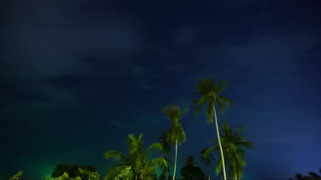Timelapse of palm trees at night in Thailand Stock Footage