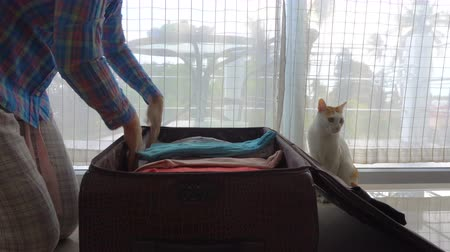 сложить : Cat help to pack a suitcase Стоковые видеозаписи