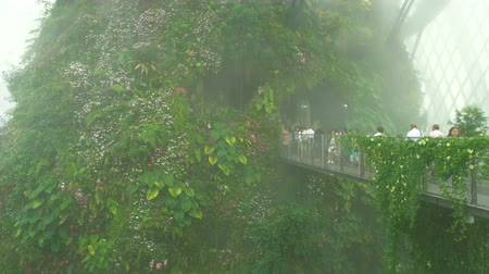 conservative : Cloud forest dome conservative in mist, Gardens by the Bay in Singapore Stock Footage