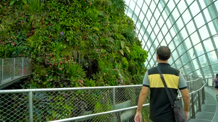 artificial flower : Male tourist walking at Cloud Forest, Gardens by the Bay in Singapore Stock Footage