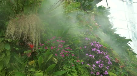artificial flower : Misty flowers in cloud forest, Gardens by the Bay in Singapore Stock Footage