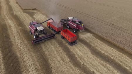 Aerial view of modern combine harvesting wheat on the field. The harvester unloads grain into truck Dostupné videozáznamy