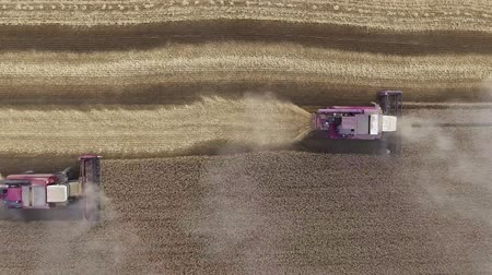 Top view. Aerial view of modern combine harvesting wheat on the field. Flying directly above combine.
