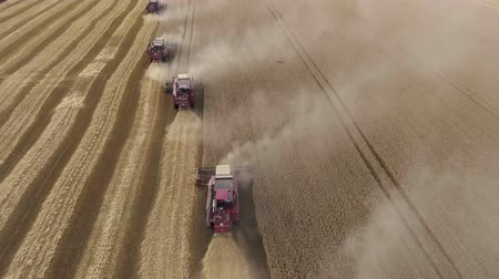Fast flight over the wheat field. The harvesters gather the grain. Horizon