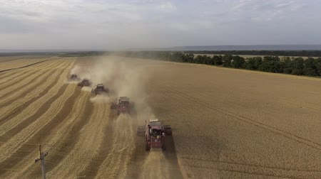 Flight over the wheat field. The harvesters harvest. Agriculture and agro-industry 4K