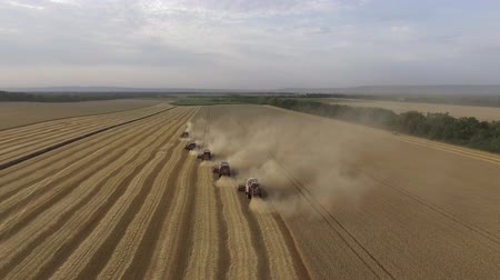 Aerial view of modern combine harvesting wheat on the field. Flying directly above combine. Top view. Agriculture scene. Dostupné videozáznamy